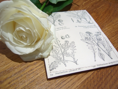 DIY Seed Packet Wedding Favours